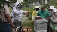Rich teaching a bee class at Catherine Ferguson Academy.