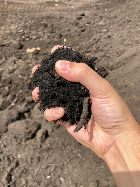 A handful of recently processed compost.Eli Newman / WDET