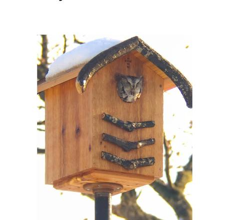 Screech owls prey on rats and can be easily attracted to a property by building them a house.Courtesy of Jan Bills