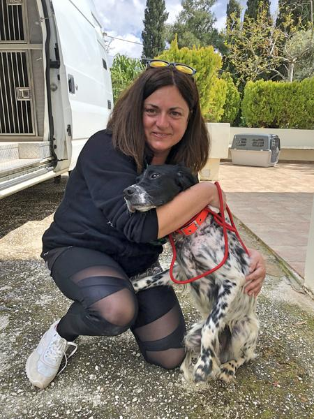 Maria Sougra poses with Danos - one of the English Setters she nursed back to health at Pet Transport Kennels.Jennifer Cloherty