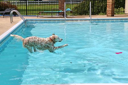 Humphrey enjoys some well-earned pool time at Jennifer Cloherty's rescue ranch in Temperance, Michigan.David Leins / WDET
